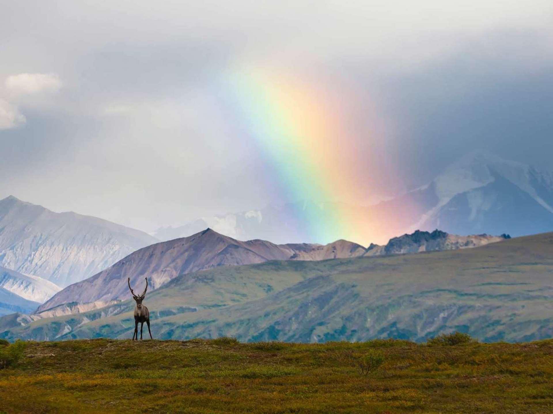 Imperdibles cosas para hacer en un viaje por Alaska