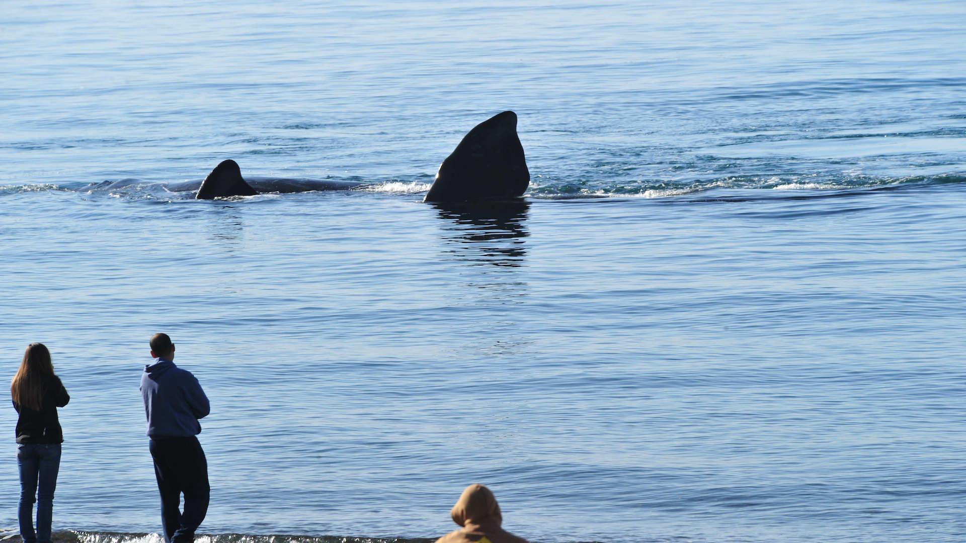 Puerto Madryn inauguró la temporada 2021 de ballenas: video
